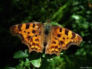 Butterfly 1384