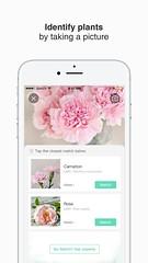 2 (picturethis_plants) Tags: picturethis app