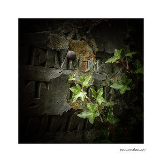 ivy on gravestone....