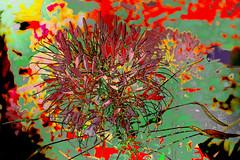 Coloreada (seguicollar) Tags: flower flor inflorescencia red rojo green verde plantas vegetal vegetación imagencreativa photomanipulación art arte artecreativo artedigital virginiaseguí