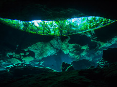 Forest Reflections (altsaint) Tags: 714mm chacmool gf1 mexico panasonic cavern caverndiving cenote scuba underwater