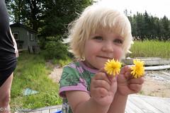 Sonja (Hans Olofsson) Tags: halland nösslinge sommar sonja gul blomma flower yellow