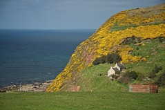 Live With The Seasons (4oClock) Tags: nikon d90 scotland morayfirth outdoor northsea northeast north landscape pennan village hill sea yellow green farm simple