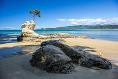 New Zealand - Tinline Bay [explored] (mho.online) Tags: canon eos 6d ef2470mmf14lisusm new zealand south island sun sunshine blue sky view hike tree lone lonesome landschaft südinsel tinline bay rock stein baum bucht sonne sonnenschein blau himmel aussicht weg pfad abel tasman national park wanderung