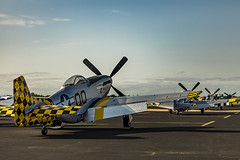 Stallions at ease (Boomingecho) Tags: warbirds aviation airplane p51 p51mustang wwiifighter airshow breckenridgeairshow2017 aviationphotography