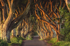 Ireland - The Dark Hedges (030mm-photography) Tags: rot ireland irland reise travel northernireland nordirland nord thedarkhedges wood forrest wald bäume sonnenaufgang sunrise causeway light shadow licht schatten europa europe