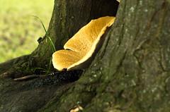 IMGP3544.jpg (Zeilenende) Tags: rosensteinpark baum stuttgart pilz stuttgartnord