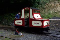 "29.07.17 Lhen Coan ""Polar Bear"" (philstephenrichards) Tags: isleofman groudleglenrailway ggr lhencoan manx polarbear alankeef narrowgauge"