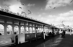 Brighton Palace Pier (photoksenia) Tags: brighton england pier blackandwhite bw uk street