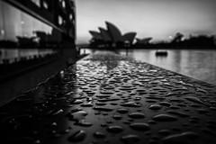Hyatt (Leighton Wallis) Tags: sony alpha a7r mirrorless ilce7r 1635mm f40 emount sydney circularquay nsw newsouthwales australia bokeh rain droplets dof focus sydneyoperahouse silhouette