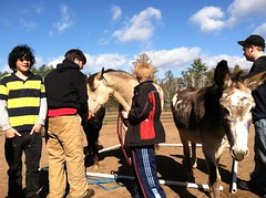 Equine-Therapy (1)