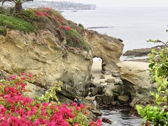 The Keyhole from the bluff (Bennilover) Tags: thekeyhole lagunabeach tidepools arches ocean pacific rocks bluff montage bougainvillea flowers people rocky zoom