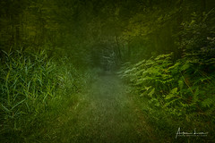 Belgica Tropical (Alec Lux) Tags: eeklo hdr hdrphotography belgium branches dens fog forest green landscape landscapephotography mist nature naturephotography path trees vegetation woods zomergem vlaanderen be