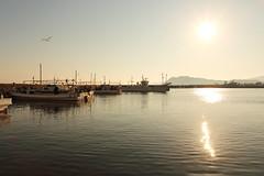 Morning light (Teruhide Tomori) Tags: fishingboat fishingharbor asamogawa kyoto japan japon amino sea sun morning boat tangopeninsula 浅茂川漁港 網野 京丹後市 丹後半島 漁船 朝日 日の出 京都 海 日本