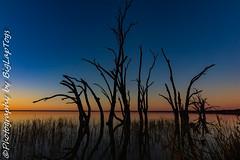 IMG_5438 (biglaptogs) Tags: barmera lakebonney riverland sa states sunsetsunrise