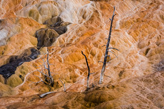 Survival (dominiquemary1) Tags: mammoth hot springs yellowstone trees bird nature wildlife wild remains survival bacteria america usa landscape gardiner travel photography colour