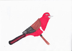 Rotkopf-Feuertrogon (Jonathan Stroebel) Tags: jonathan zeichnungen bleistift brushpen gemälde kunst tiere lebewesen kind junge künstler drawings pencil painting art animals livingorganism child boy artist vogel bird