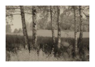 im Juli - Meyer Görlitz Lydith / Pentacon 30mm 1:3.5