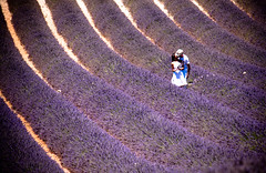 La lavande baiser (gidima) Tags: lavanda lavande lavander purple flower field naturelover summer valensole provence france provenza fiori amore bacio baiser love kiss europe lavender travel tourism panorama view breathtaking colors color coulor diagonali