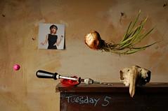 Tuesday 5 (Studio d'Xavier) Tags: tuesday5 stilllife surreal skull drill taylorswift onion strobist