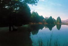 Morning Reflections (adrparkinson) Tags: expiredfilm agfavista200 olympustrip35 drakensberg pond trees nature water reflections