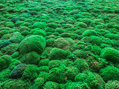 Dosh 2017 (marc_dost) Tags: wonga moss green moos sponduliks carragreen irish