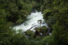 Okere Falls (ericducourneau) Tags: newzealand travel landscape beach mountain volcano explore birds animals roadtrip adventure hiking trek cave glowworms tongariro