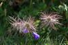 _D7K9475 (lions_italy) Tags: emilius escursioni gsv pila