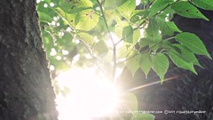 meditation in pretty park (visualstorymaker) Tags: nature green sunshine sun park walk summer meditation rest tree leaf leaves whitenoise suwon korea 자연 초록 숲 forest 산책 공원 여름 명상 휴식 나무 잎사귀 백색소음 화이트노이즈 한국 수원 야외 outdoor 소니 a7r2