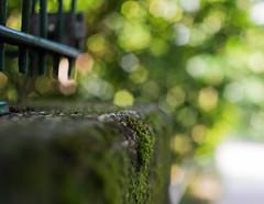 Domiplan-Fenced-Friday  HFF (VintageLensLover) Tags: hff fenced friday fencedfriday fence domiplan schärfentiefe schärfeverlauf bokeh zaun meyergörlitz 50mm
