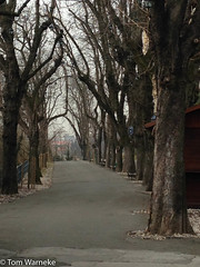 Zagreb Park (Tom Warneke) Tags: trees pathway park croatia zagreb winter cityofzagreb hr