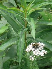 Busy As... (artofjonacuna) Tags: plants flowers bee