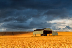 Dutch Barn at Sixpenny Handley wheat fields (mpelleymounter) Tags: sixpennyhandley dorset clouds crops wheat wheatfields dutchbarn barn dorsetcountryside lightanddark storm sunshine farming englishcountryside leefilters shadows markpelleymounter wwwphotomarkscouk lines wheeltracks tracks harvest