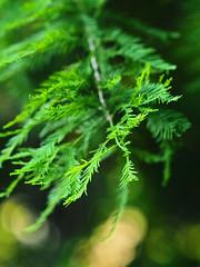 IMGPK00031A_Fk - Hayswood Nature Preserve (David L. Black) Tags: hayswoodnaturepreserve olympuspenf olympus75f18