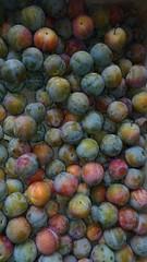 "Organic Prunes ""Reine-Claude Doré"" (lobotomyzed) Tags:"