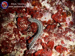 "Kalymnos Diving • <a style=""font-size:0.8em;"" href=""http://www.flickr.com/photos/150652762@N02/35505915013/"" target=""_blank"">View on Flickr</a>"