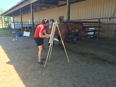 NWP-Horse-Therapy (5)