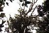 AA021A (Walletwood) Tags: leicam3 summicron film 35mm raub sitiawan malaysia kampung m3 agfa kodak portra