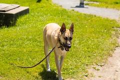 2U7A2426 (rpealit) Tags: scenery wildlife nature east hatchery alumni field dog