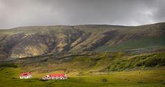 Icelandic Farm (Jack Landau) Tags: iceland farm rural mountains clouds green grass nature landscape jack landau