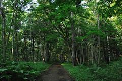 DSC_6214 (hongzhe325074) Tags: travel japan hokkaido nikond700 28300mmf3556