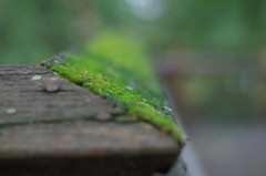 Moss on a handrail at A.D. Barnes Park (erluko) Tags: moss adbarnespark miamidadeparks rail structure plant growing wood nails green bokeh smcpentaxf11750mm