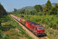 Caminha (REGFA251013) Tags: takargo comsa tren train comboio mercadorias 6001 refer infrastructuras de portugal
