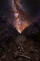 Cosmic Lavender (willblakeymilner) Tags: landscape soil winter color water nature stones sun light abstract texture nikon uk england art dark space outdoors astronomy science milky way astro twig lavender desktop cotswolds worcestershire stars d810