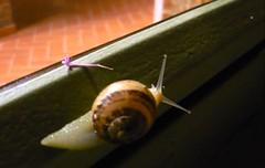 P1030872 (i'gore) Tags: montemurlo lumaca borghetto lentezza calma