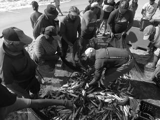 Pescaria - Praia da Leirosa - Figueira da Foz