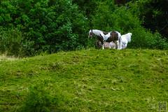 2017-07-19_10-14-53 (der.dave) Tags: 2017 esel flachau juli pferd pferdesel salzburg sommer vormittag wolkig bewölkt vormittags österreich