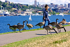 GasWorksPark_ 10 (hitomid) Tags: gasworkspark lake geese
