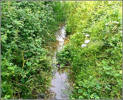 Various Foliage ... (** Janets Photos **) Tags: uk naturereserves hull bransholme foliage greenery streams