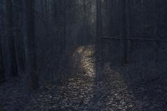 twilight stories I (Mindaugas Buivydas) Tags: lietuva lithuania color forest tree trees evening eveninglight twilight autumn fall november path mindaugasbuivydas favoriteplaces home